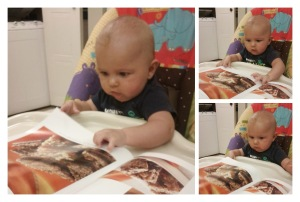 The drool on my King Arthur Flour Cookie Companion Cookbook pages is from the 5 month old. I swear!